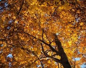 Wycieczka na Turbacz w Gorcach - las jesienią