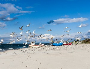 Wakacje nad polskim morzem – Krynica Morska